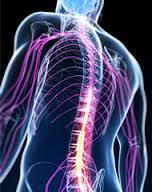 hrbet povezave